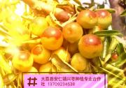 大荔县扶贫产品