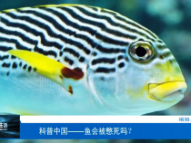 科普中国——鱼会被憋死吗?