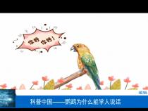科普中国——鹦鹉为什么能学人说话