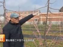 壮壮帮忙:苹果树如何修剪 专家给您来支招