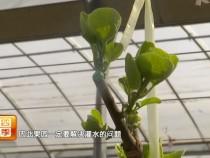 猕猴桃果园管理目前急需解决的问题