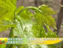 坤禾生物菌肥:改善修复土壤 创造持续高产增收