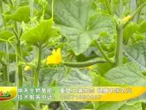 坤禾生物菌肥