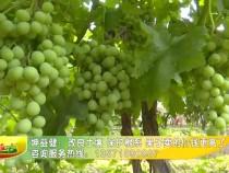 坤益健:改良土壤 保护根系 果子卖的价钱更高了