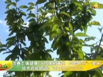 """改善土壤健康 治疗果树黄化  只差优马""""一毫米"""""""
