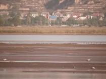 合阳县:洽川湿地迎来首批越冬候鸟