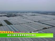 渭南市春季果园管理云课堂(一):温室大棚冬枣春季管理技术要点