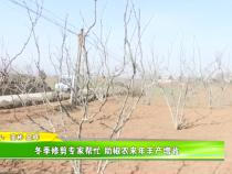 冬季修剪专家帮忙 助椒农来年丰产增收