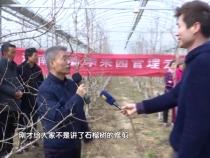 渭南市春季果园管理云课堂(六):软籽石榴新建园的管理技术