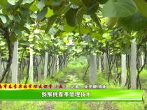 渭南市春季果园管理云课堂(五):猕猴桃春季管理技术