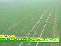 448万亩小麦苗情整体较好 技术人员带药侦查防条绣病