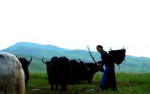 《脱贫在行动》阿妈的牛粪车