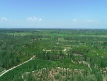 《瞰渭南》大荔沙苑林场白马林区:最美沙漠绿洲