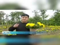临渭区信义郝家村:装扮彩色十月 百余种菊花缤纷上市