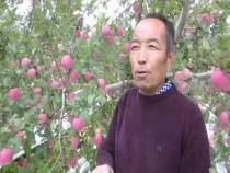 老闫的苹果大丰收