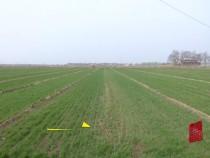 做好小麦春季管理 确保夏粮丰产丰收