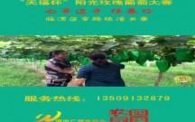 """""""天福杯""""阳光玫瑰葡萄大赛选手展播(七):杨春玲"""