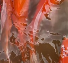 黄河滩区老村变鲤鱼塘,全村增收上百万红烧鱼糖醋鱼央视小姐姐带你打卡黄河鲤鱼的N种吃法