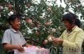 合阳县:农民收入中果业占多半