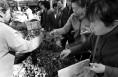 野菜上市市民抢先品尝 最贵的白蒿一斤12.5元