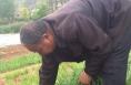 临渭区阎村镇宋家村宋亮娃 带动村民种植蔬菜致富