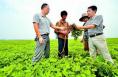 澄城六种产业扶贫模式促增收