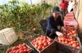 白水:涉农企业产业帮扶贫困村实现全覆盖