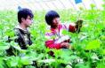 澄城精心打造新型职业农民品牌