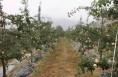 果园秋季步骤歌,来了!