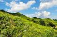 武帝山国家森林公园已经开园 您去了吗?