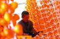 富平:柿子产业助力精准脱贫 总产值达6.5亿元