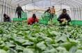 澄城5家农民合作社被省农业厅认定为省级百强社