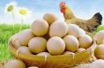 """白水扶贫鸡蛋搭上""""食堂直供""""快车"""