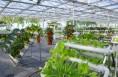 澄城现代农业发展彰显新活力