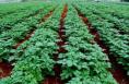 """白水县获批""""全国绿色食品原料标准化生产基地"""""""