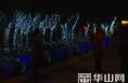 高新区建设局:彩灯点缀万株绿 映照祥和幸福年