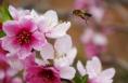 相约华州桃花节 让您陶醉这个美丽春天