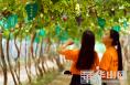 CCTV《我爱畅游》栏目组来渭南葡萄产业园了