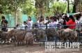 五一小长假大荔县鸵鸟园里游人如织