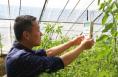 大荔返乡创业青年 用科技让乡亲在指尖上种冬枣