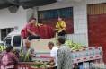大荔:鲜食玉米按个卖当地农民受益