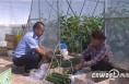 韩城:大棚蔬菜喜获丰收 为贫困户开拓脱贫致富小康路