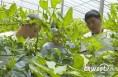 韩城:推广设施农业技术 助力脱贫攻坚