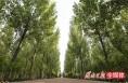 合阳牢树生态文明理念 群众尽享生态之美