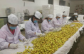 100元一斤 大荔冬枣出口多个国家