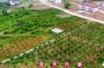 澄城县建成146个村级扶贫产业园