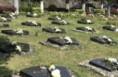 潼关今起专项整治殡葬领域突出问题