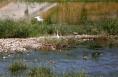 富平山水林田湖生态保护修复工程紧锣密鼓施工
