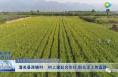 潼关县西姚村:村上建起合作社 群众走上致富路