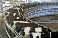 合阳恒源林牧万头奶牛养殖园区项目预计今年年底完工